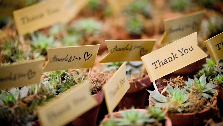 potted plants with thank you flags